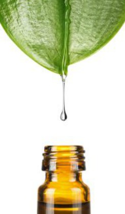 Blanchir ses dents naturellement avec l'huile essentielle d'arbre à thé
